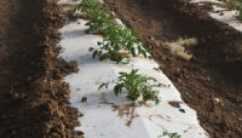 High tunnel vegetable, flower seed production highlight Aug. 9 special event