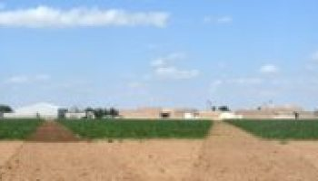 Summer Crops/OAP Center Pivot Irrigation Field Day set Aug. 9 at Bushland