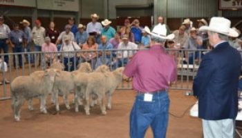 45th Annual Sheep and Goat Field Day, Texas Sheep and Goat Expo set for Aug. 17-18