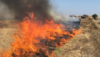 AgriLife Extension sets Rancher Roundtable: Partners in Prescribed Burning Sept. 12-13 in San Angelo