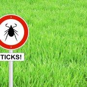 Ticks-Schlegelfotos-iStock