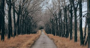trees_along_a_country_road-wallpaper-1440x900