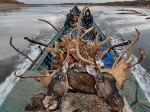 Along the Porcupine River caribou have been a mainstay of the Vuntut Gwitchin people for at least 10,000 years. Now development is threatening their traditional way of life.