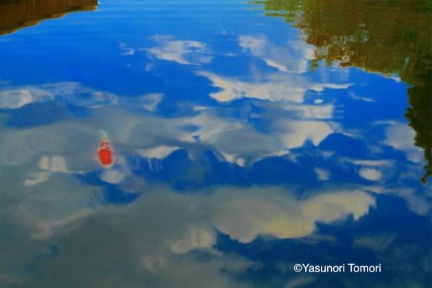 Swim a sky