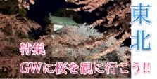 特集東北桜