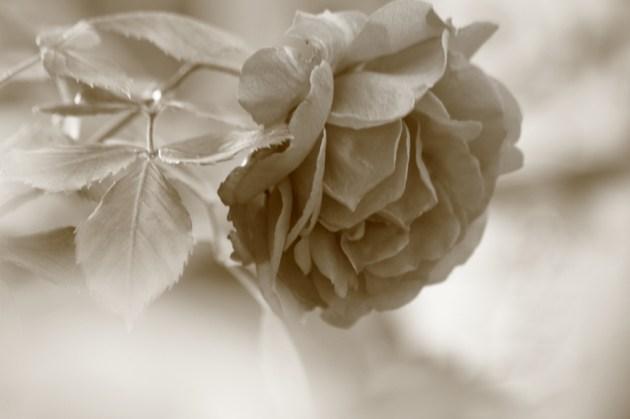 Love is like a flower=愛は花のようなもの