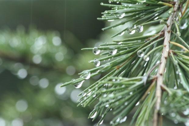 雨粒のダイヤ