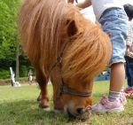 気分はマイリトルポニー!神奈川で乗馬ができる公園など10ヶ所ご紹介