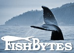 publications_newsletters_fishbytes_0