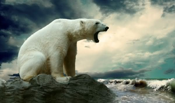 Resultado de imagem para fotos de animais selvagens com fome Urso Polar