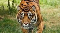 Top 10 animais mais ameaçados de extinção no mundo