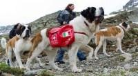 Top 10 maiores raças de cães do mundo