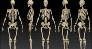 Top 10 maiores ossos do corpo humano