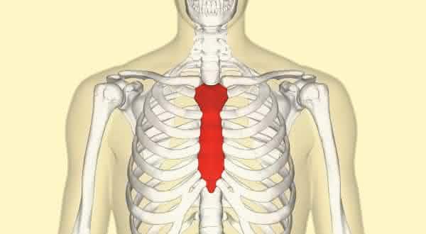 esterno entre os maiores ossos do corpo humano