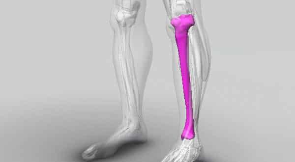 osso tibia entre os maiores ossos do corpo humano