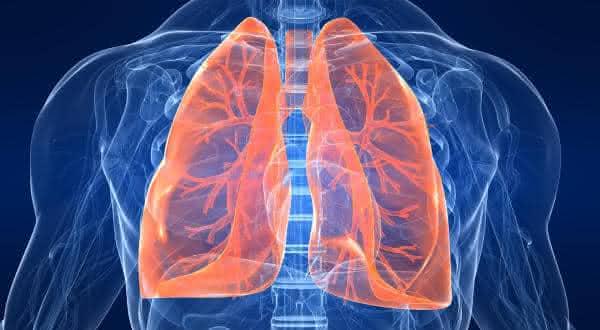 pulmoes entre os maiores orgaos do corpo humano