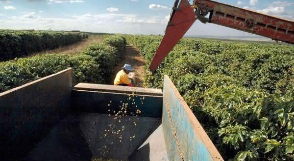 brasil entre os maiores produtores de cafes do mundo