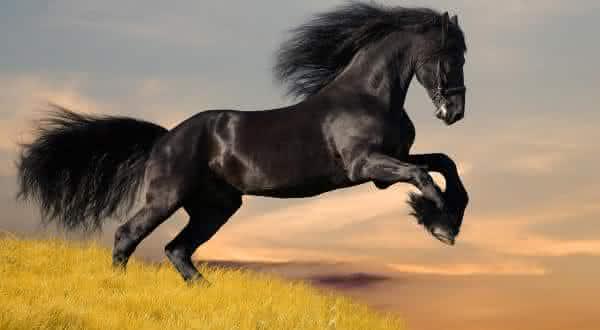 mustang entre as racas de cavalos mais caras do mundo