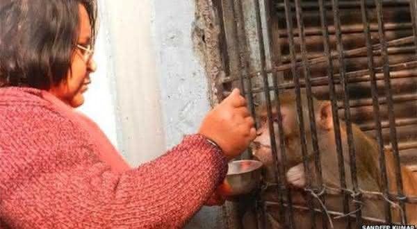 Chunmun entre os animais mais ricos de todos os tempos