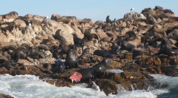 ilhas das focas entre os piore fedores do mundo