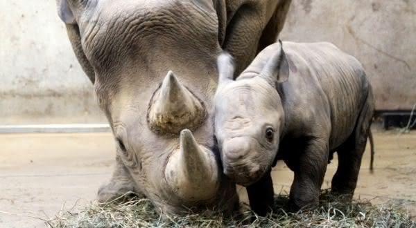 Top 10 animais com os períodos de gestação mais longos