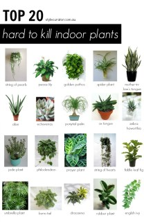 20 indoor plants