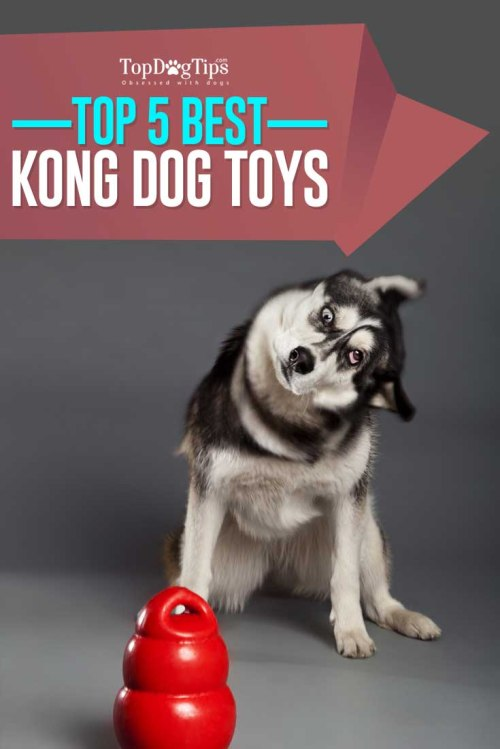 Medium Of Dog Toys For Aggressive Chewers