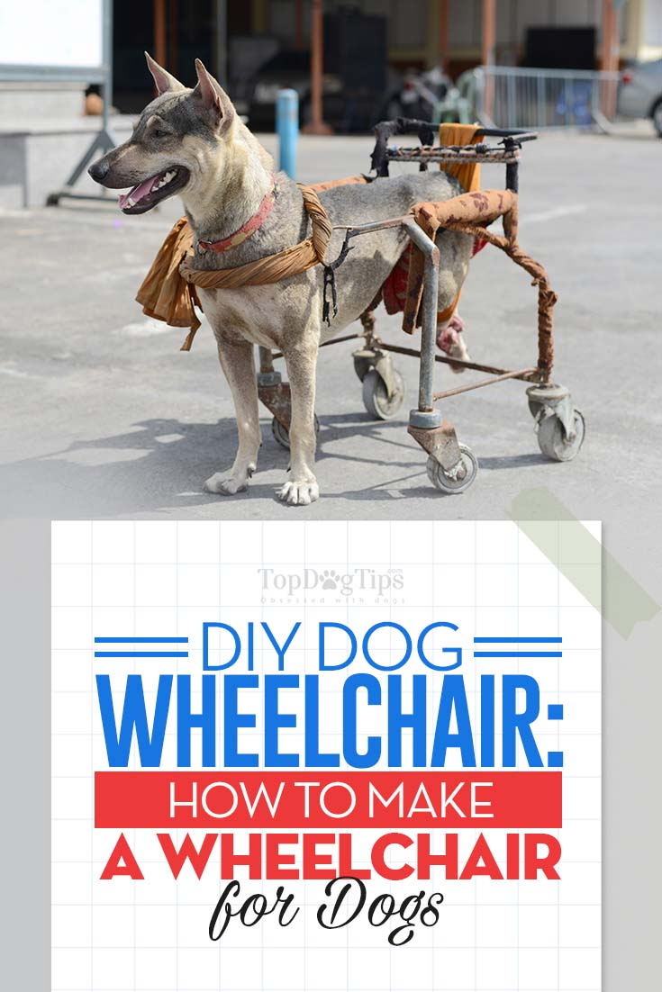 Engrossing Dogs By Yourself Diy Dog Wheelchair Measurements Diy Dog Wheelchair 4 Wheels Diy Dog Wheelchair Guide Diy Dog How To Make A Wheelchair bark post Diy Dog Wheelchair
