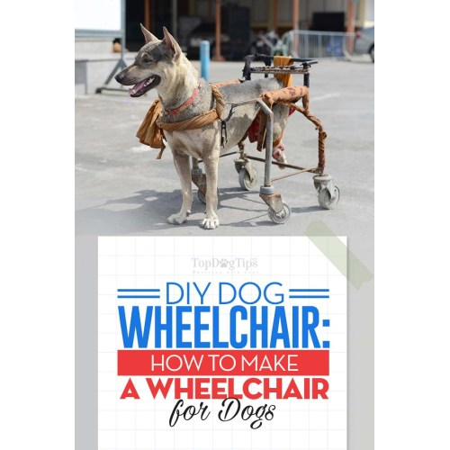 Medium Crop Of Diy Dog Wheelchair
