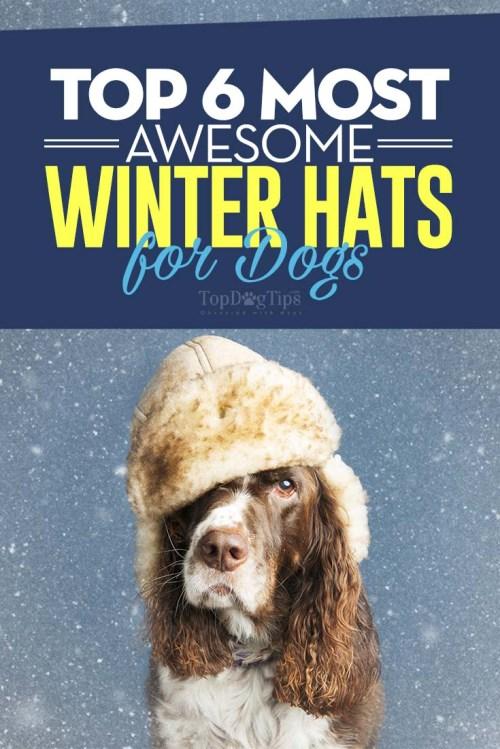 Medium Of Dogs Wearing Hats