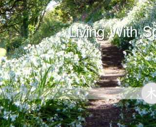 Acupuncture and spring. The Torbay Acupuncture Centre, Torbay, Devon.