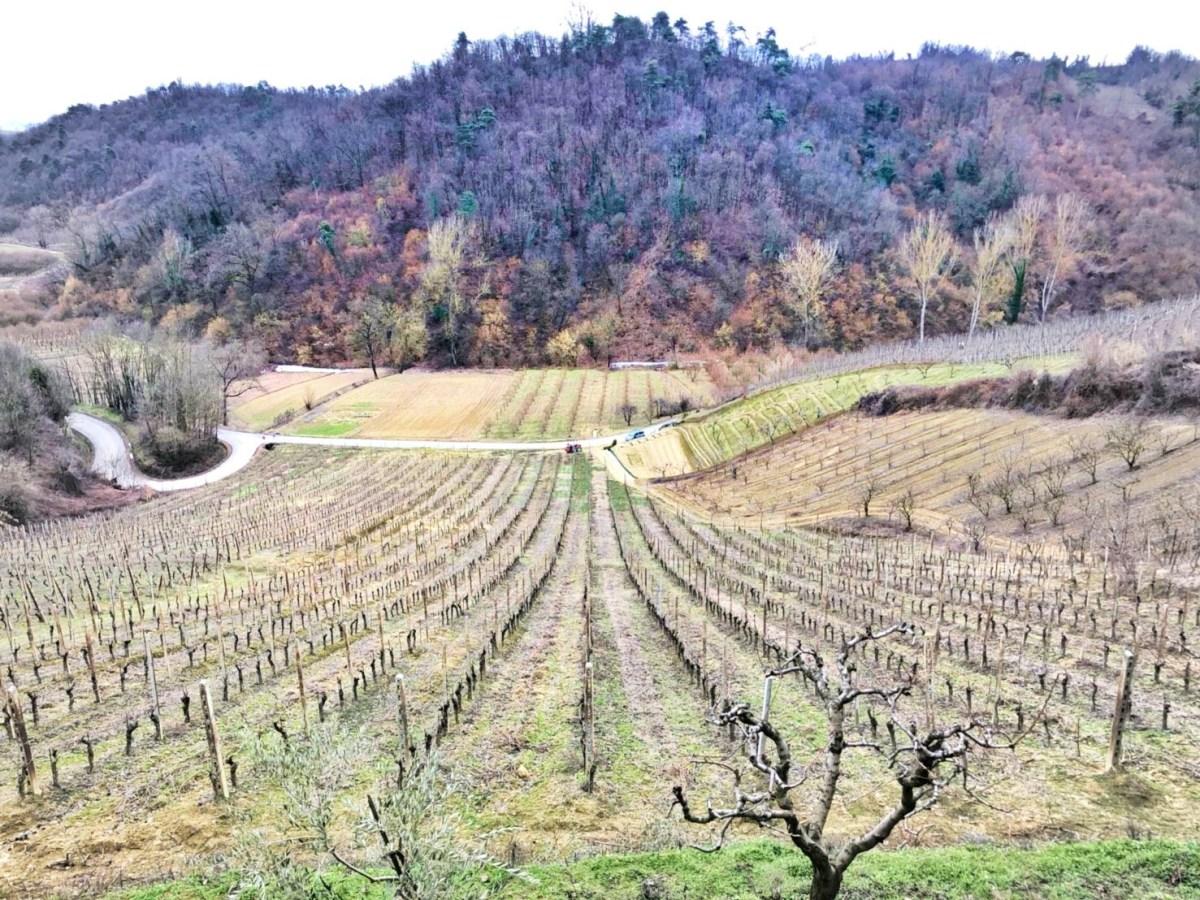 cascina chicco_vineyard