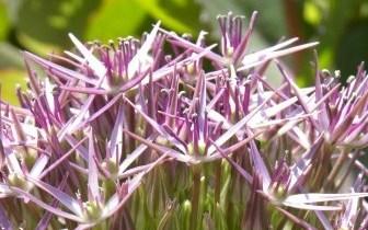 >Blooming this week (June 15- 21)
