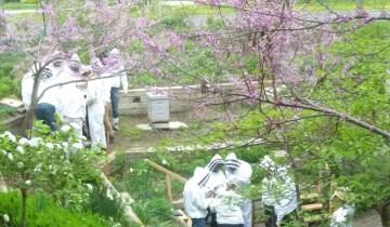 Spring Hive Check - Pollinator