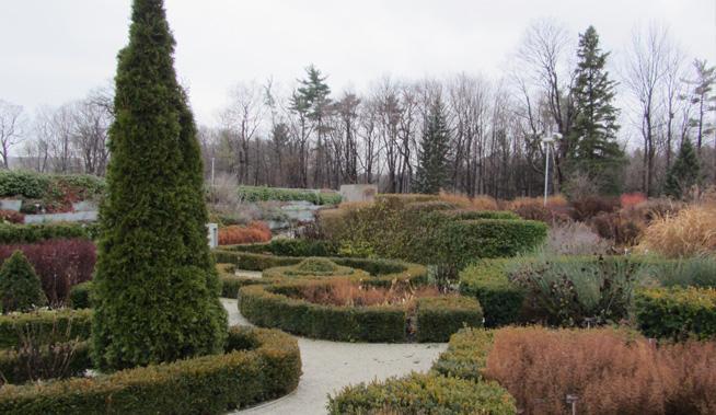 beryl-ivy-knot-garden-fall