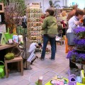 our busy shop at blooms