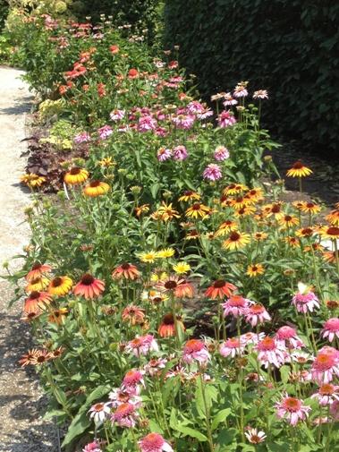 Echinacea: The Whole Shootin' Kaboodle in the Show Garden