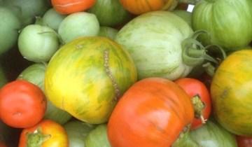 September Harvest from the Demonstration Courtyard