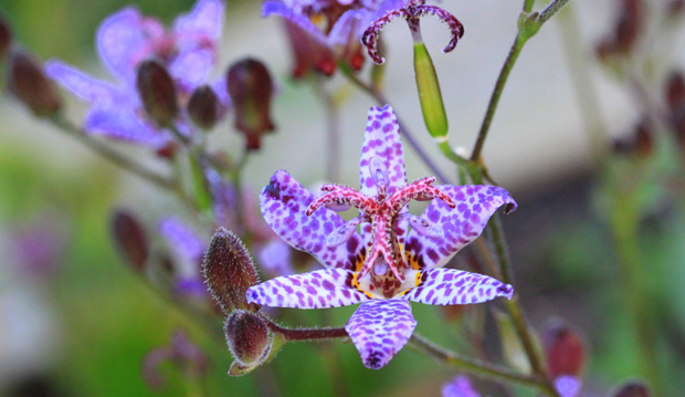 Paul's Plant Pick 1