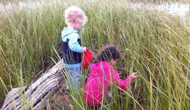 Marley and Jude search for frogs in a marsh