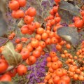 Ilex verticillata orange berries