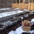 planting bulbs through the snow