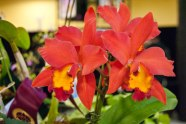 There were plenty of beautiful orchids at the show, like this vibrant orange and yellow.