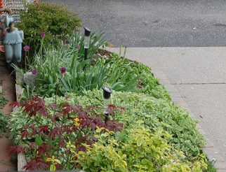 Sneak peek of an upcoming garden, with a garden from last year in Scarborough.