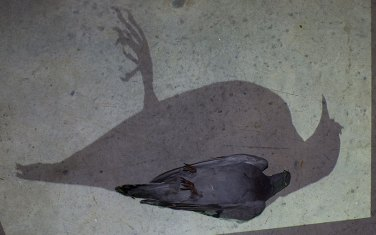 Juan Zambora's dead pigeon work, where the shadow but not the figure is animated.