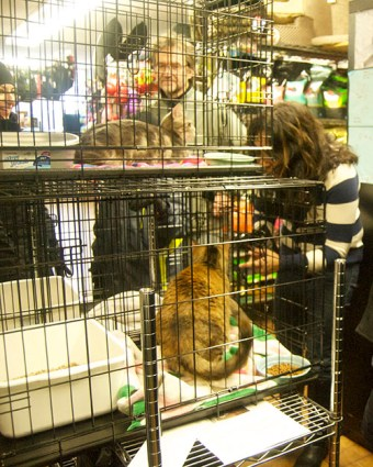 Jay Jay and Annabelle pictured here with Nalini Ramroop, event coordinator and volunteer at Toronto Cat Rescue.