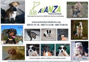 Perros en adopción - Avanza Torrelodones (Febrero 2012)