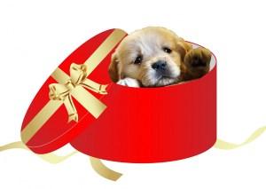mascota-regalo