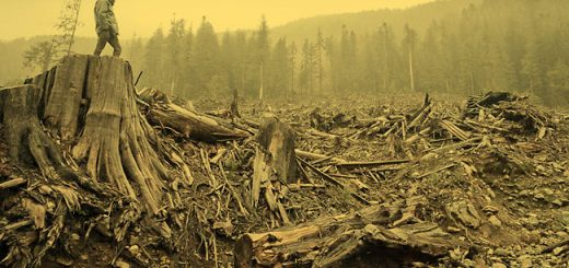 Bugaboo_Creek_Clearcut1