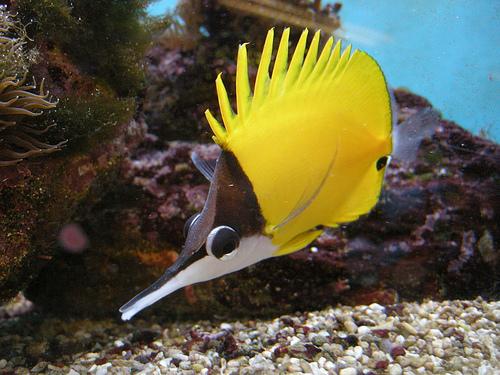 Saltwater Fish   Total Fish & Pets